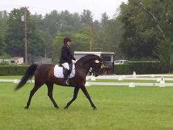Sue Adams-Conley competing her Morgan mare Candee at first level!