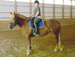 Fairfield student, Joyce Caranci now owns Sugar, a draft cross mare & she has a new show name Citrona!