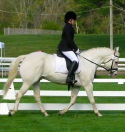 Maureen Dooley showing our school horse Max!